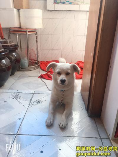长沙找狗主人,如果你是狗狗的主人,请你尽快联系我,如果不是,请勿打扰,它是一只非常可爱的宠物狗狗,希望它早日回家,不要变成流浪狗。