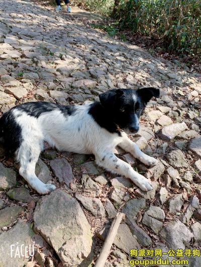 宁波寻狗启示,宁波江东鄞州人民医院附近走失一条黑白相间的小狗,它是一只非常可爱的宠物狗狗,希望它早日回家,不要变成流浪狗。