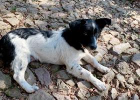 寻狗启示,宁波江东鄞州人民医院附近走失一条黑白相间的小狗,它是一只非常可爱的宠物狗狗,希望它早日回家,不要变成流浪狗。