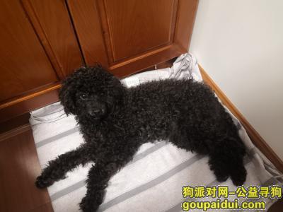 ,寻找狗主人或好心人领养可爱泰迪,它是一只非常可爱的宠物狗狗,希望它早日回家,不要变成流浪狗。