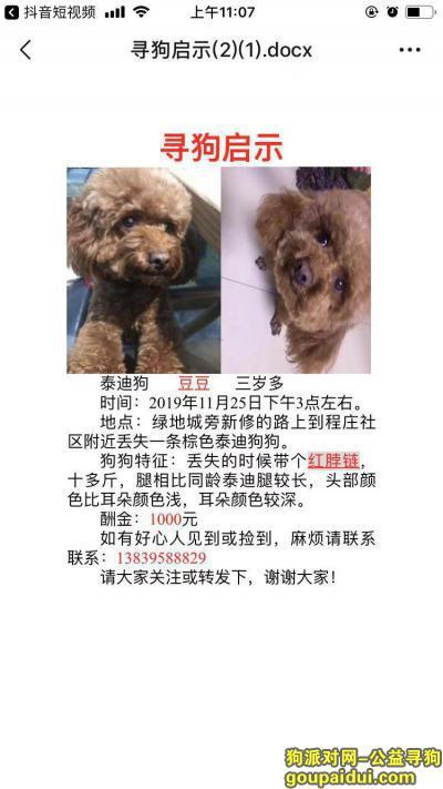 漯河寻狗启示,2019.11.25丹江路丢失一只泰迪狗,它是一只非常可爱的宠物狗狗,希望它早日回家,不要变成流浪狗。
