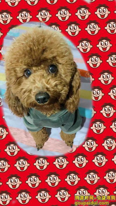 沧州寻狗启示,爱犬于2019年11月27日在沧州市河间市大里文村附近走失,它是一只非常可爱的宠物狗狗,希望它早日回家,不要变成流浪狗。