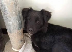 寻狗启示,18年萧山区农产品批发市场掉的,小串串黑狗奖1000,它是一只非常可爱的宠物狗狗,希望它早日回家,不要变成流浪狗。