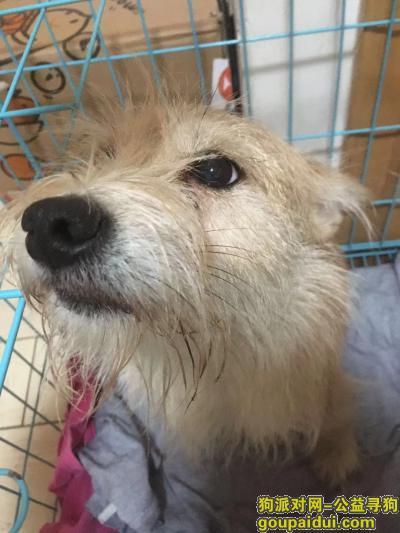 【天津捡到狗】,11月28日,在南开区捡到一只狗,它是一只非常可爱的宠物狗狗,希望它早日回家,不要变成流浪狗。