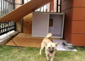 寻狗启示,合肥高新区方兴大道与习友路惠而浦附近丢失,它是一只非常可爱的宠物狗狗,希望它早日回家,不要变成流浪狗。