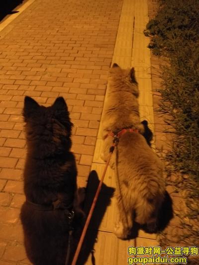 阜阳找狗,寻找一只阿拉斯加狗狗,它是一只非常可爱的宠物狗狗,希望它早日回家,不要变成流浪狗。