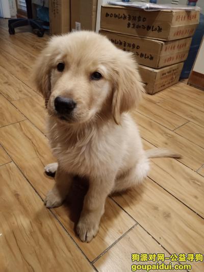 【武汉找狗】,江岸区南湖十三队走掉的,它是一只非常可爱的宠物狗狗,希望它早日回家,不要变成流浪狗。