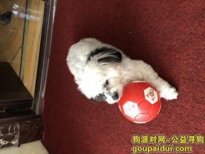 ,杭州下沙寻狗急急急急急,它是一只非常可爱的宠物狗狗,希望它早日回家,不要变成流浪狗。