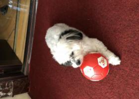 寻狗启示,杭州下沙寻狗急急急急急,它是一只非常可爱的宠物狗狗,希望它早日回家,不要变成流浪狗。