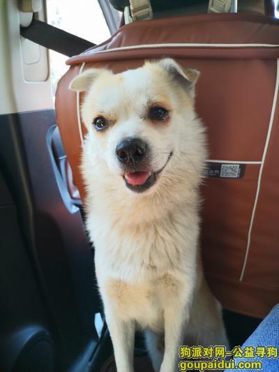 十堰找狗,非常着急,欢欢快回家吧,它是一只非常可爱的宠物狗狗,希望它早日回家,不要变成流浪狗。