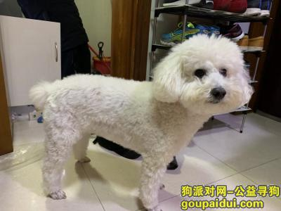 寻狗启示,狗狗走失,于12月5日大约下午3点左右 上海市虹口区沽源路沽一小区,它是一只非常可爱的宠物狗狗,希望它早日回家,不要变成流浪狗。