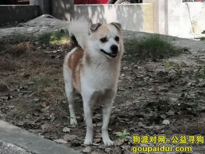 十堰丢狗,帮帮忙必有重谢,欢欢快回家,它是一只非常可爱的宠物狗狗,希望它早日回家,不要变成流浪狗。