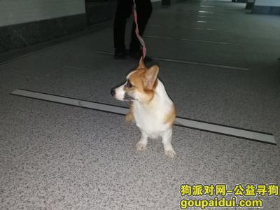 汕头找狗主人,汕头御景江南2期物业收留走失狗一只,它是一只非常可爱的宠物狗狗,希望它早日回家,不要变成流浪狗。