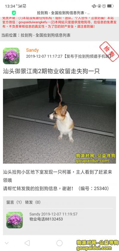 汕头捡到狗,在御景二期物业这里!88132453/88132454,它是一只非常可爱的宠物狗狗,希望它早日回家,不要变成流浪狗。