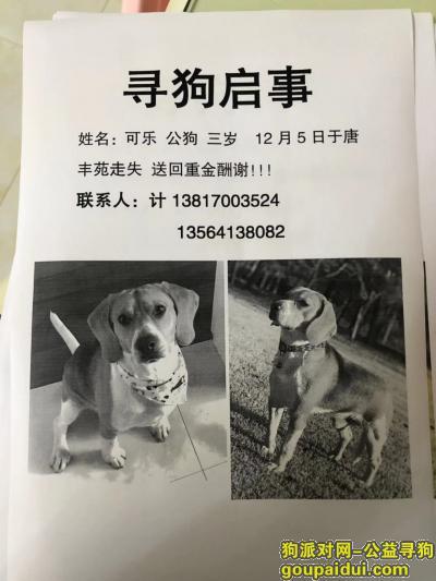 上海浦东新区唐丰苑重金寻找比格犬,它是一只非常可爱的宠物狗狗,希望它早日回家,不要变成流浪狗。