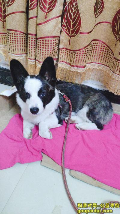 ,十二月五号长咀农贸市场附近走丢,它是一只非常可爱的宠物狗狗,希望它早日回家,不要变成流浪狗。