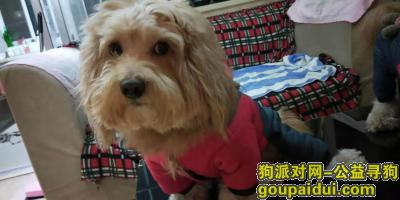 湖州寻狗启示,爱犬于2019年12月7日下午3点在吴兴区市陌小区附近走失,它是一只非常可爱的宠物狗狗,希望它早日回家,不要变成流浪狗。