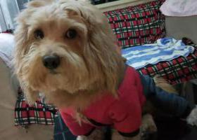寻狗启示,爱犬于2019年12月7日下午3点在吴兴区市陌小区附近走失,它是一只非常可爱的宠物狗狗,希望它早日回家,不要变成流浪狗。