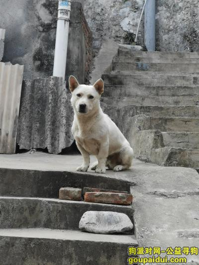 黄石寻狗网,爱犬走失,找到者重金酬谢,麻烦大家帮忙留意,它是一只非常可爱的宠物狗狗,希望它早日回家,不要变成流浪狗。