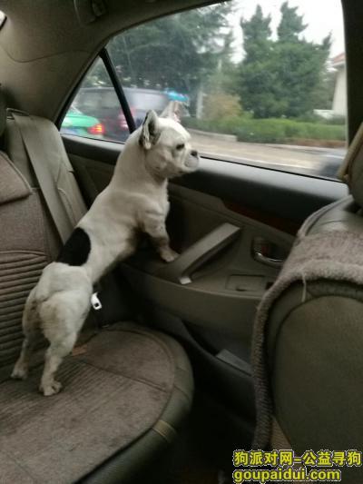 威海寻狗,本人的狗狗在温泉附近走丢了,如果大家看到请联系15634370090,必有重谢,狗狗后背有一大一小黑黑的圆圈  ,它是一只非常可爱的宠物狗狗,希望它早日回家,不要变成流浪狗。