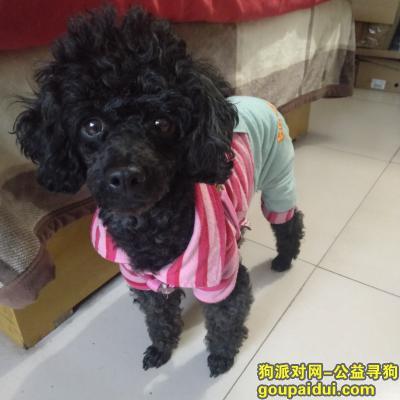 十堰找狗,寻找狗主人。希望狗主人能看到。,它是一只非常可爱的宠物狗狗,希望它早日回家,不要变成流浪狗。