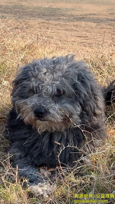 南京找狗主人,i浦口地区捡到一只狗狗像泰迪,它是一只非常可爱的宠物狗狗,希望它早日回家,不要变成流浪狗。