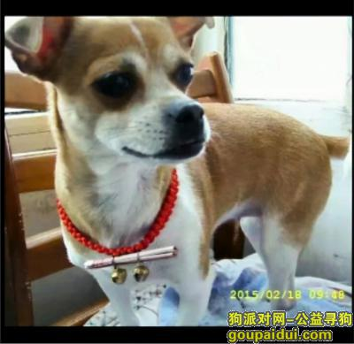 寻狗启示,爱犬娜娜 盼你早日回家团聚,它是一只非常可爱的宠物狗狗,希望它早日回家,不要变成流浪狗。