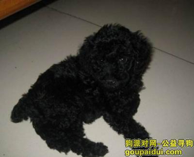 泉州寻狗网,狗狗丢了,求好心人帮忙????????????,它是一只非常可爱的宠物狗狗,希望它早日回家,不要变成流浪狗。