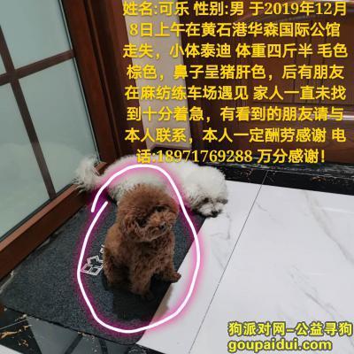 黄石寻狗启示,湖北黄石 黄石港寻狗启示,它是一只非常可爱的宠物狗狗,希望它早日回家,不要变成流浪狗。