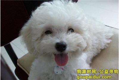 ,灰衣白泰迪北一环白水坝附近【图片不是它】,它是一只非常可爱的宠物狗狗,希望它早日回家,不要变成流浪狗。