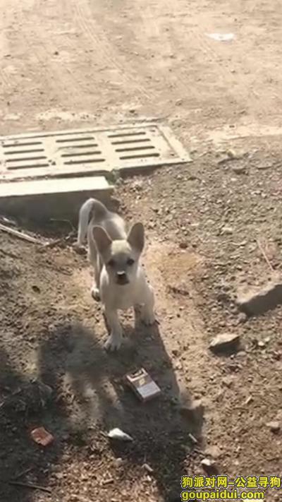 烟台寻狗,烟台市芝罘区黄务附近寻找自己跑出去玩的小狗,它是一只非常可爱的宠物狗狗,希望它早日回家,不要变成流浪狗。