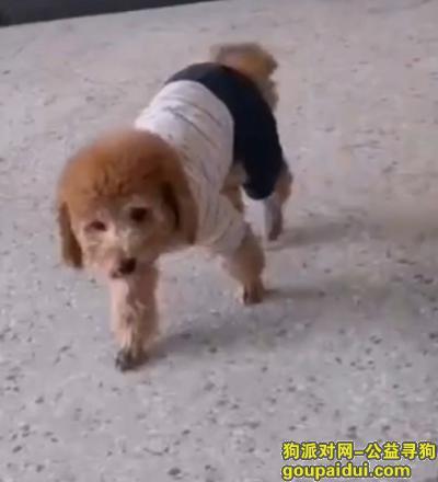 泰州找狗,12月10日下午丢失,它是一只非常可爱的宠物狗狗,希望它早日回家,不要变成流浪狗。