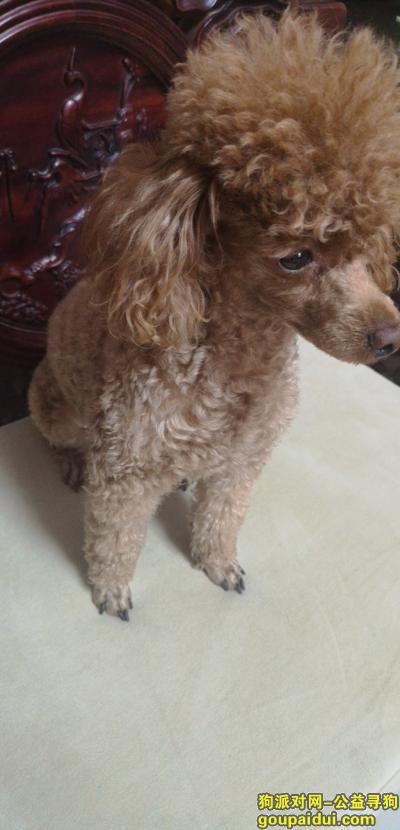 聊城寻狗,家里的小狗需要妈妈,请大家帮忙留意,它是一只非常可爱的宠物狗狗,希望它早日回家,不要变成流浪狗。