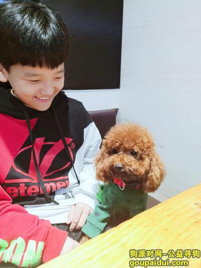 ,泰迪,寻找爱犬,我的家人,它是一只非常可爱的宠物狗狗,希望它早日回家,不要变成流浪狗。