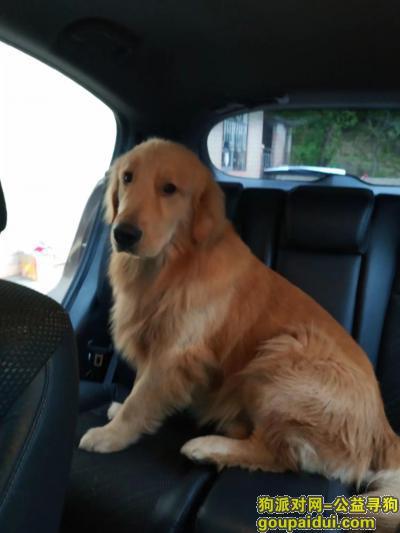 ,请爱心人士帮忙留意,万分感激,它是一只非常可爱的宠物狗狗,希望它早日回家,不要变成流浪狗。