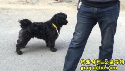 十堰寻狗,茅箭区武当路环卫处附近走丢的狗狗,它是一只非常可爱的宠物狗狗,希望它早日回家,不要变成流浪狗。