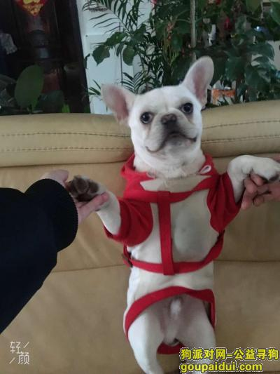 宿州找狗,来福,回家吧,它是一只非常可爱的宠物狗狗,希望它早日回家,不要变成流浪狗。