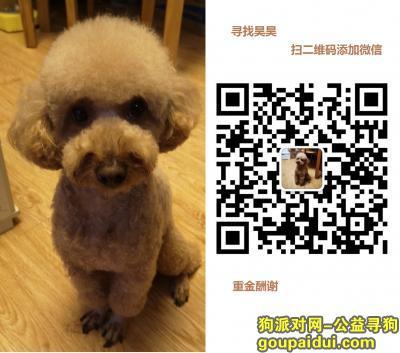 [重金酬谢]上海桃浦新村附近寻找昊昊,它是一只非常可爱的宠物狗狗,希望它早日回家,不要变成流浪狗。