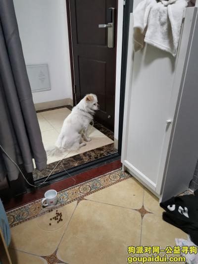 南山区,靠万象天地边上的,大沙河,捡到了,狗绳尾部是蓝色的,电话15889706233,它是一只非常可爱的宠物狗狗,希望它早日回家,不要变成流浪狗。