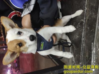 盐城寻狗,天冷了,球球快点回家吧!,它是一只非常可爱的宠物狗狗,希望它早日回家,不要变成流浪狗。