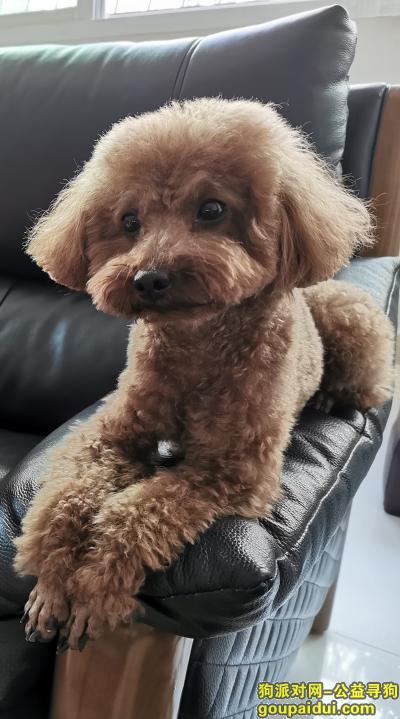 ,乐乐(叫名字会有反应),泰迪公狗,于24号晚十点左右在中信东厦花园二期小区内走丢,身上戴有灯的项圈和带有联系方式的狗牌。,它是一只非常可爱的宠物狗狗,希望它早日回家,不要变成流浪狗。