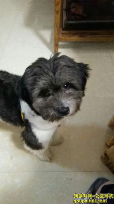柳州找狗,串串狗上身黑色下身白色,它是一只非常可爱的宠物狗狗,希望它早日回家,不要变成流浪狗。