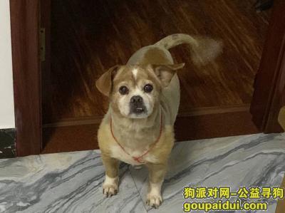 福州找狗,寻狗 2019年12月19日 仓山区上渡洋洽社区附近,它是一只非常可爱的宠物狗狗,希望它早日回家,不要变成流浪狗。