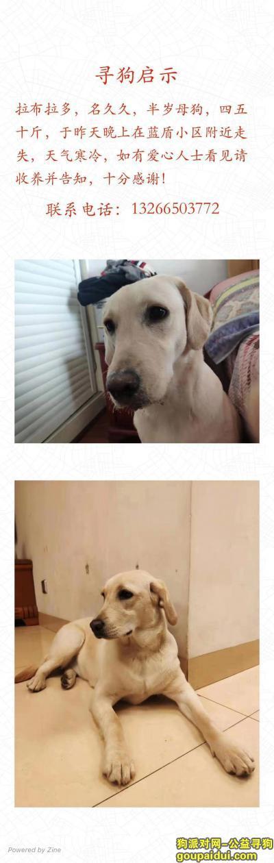 株洲寻狗,白色拉布拉多背上微黄,它是一只非常可爱的宠物狗狗,希望它早日回家,不要变成流浪狗。