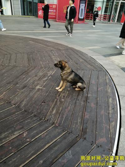 长沙捡到狗,泊富国际广场旁天幕广场,它是一只非常可爱的宠物狗狗,希望它早日回家,不要变成流浪狗。