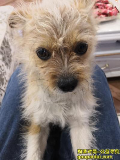 佛山找狗,寻狗启示 球球  广佛五金城走失??,它是一只非常可爱的宠物狗狗,希望它早日回家,不要变成流浪狗。