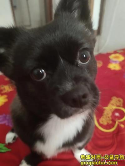 ,湖北襄阳市有偿寻狗启示,如有好心人捡到狗狗,请联系我QQ870254476,它是一只非常可爱的宠物狗狗,希望它早日回家,不要变成流浪狗。