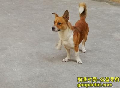 ,在宝安区西乡的流浪狗,它是一只非常可爱的宠物狗狗,希望它早日回家,不要变成流浪狗。