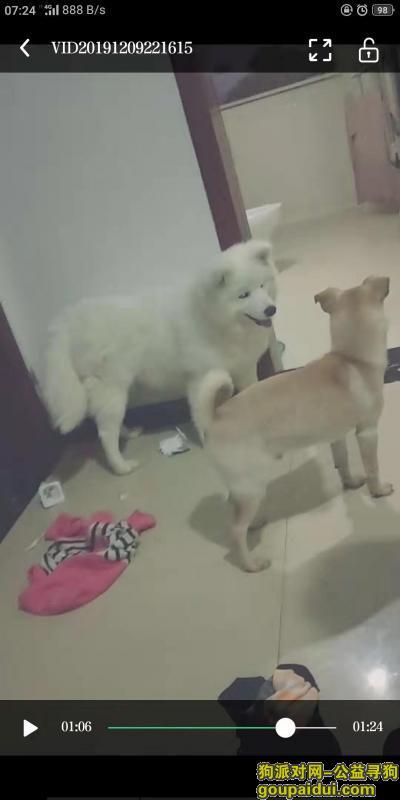 宿迁寻狗,让狗回家,我们在等她,它是一只非常可爱的宠物狗狗,希望它早日回家,不要变成流浪狗。