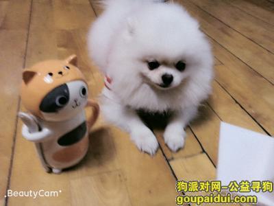 ,拜托好心人帮串串回家(已回家),它是一只非常可爱的宠物狗狗,希望它早日回家,不要变成流浪狗。